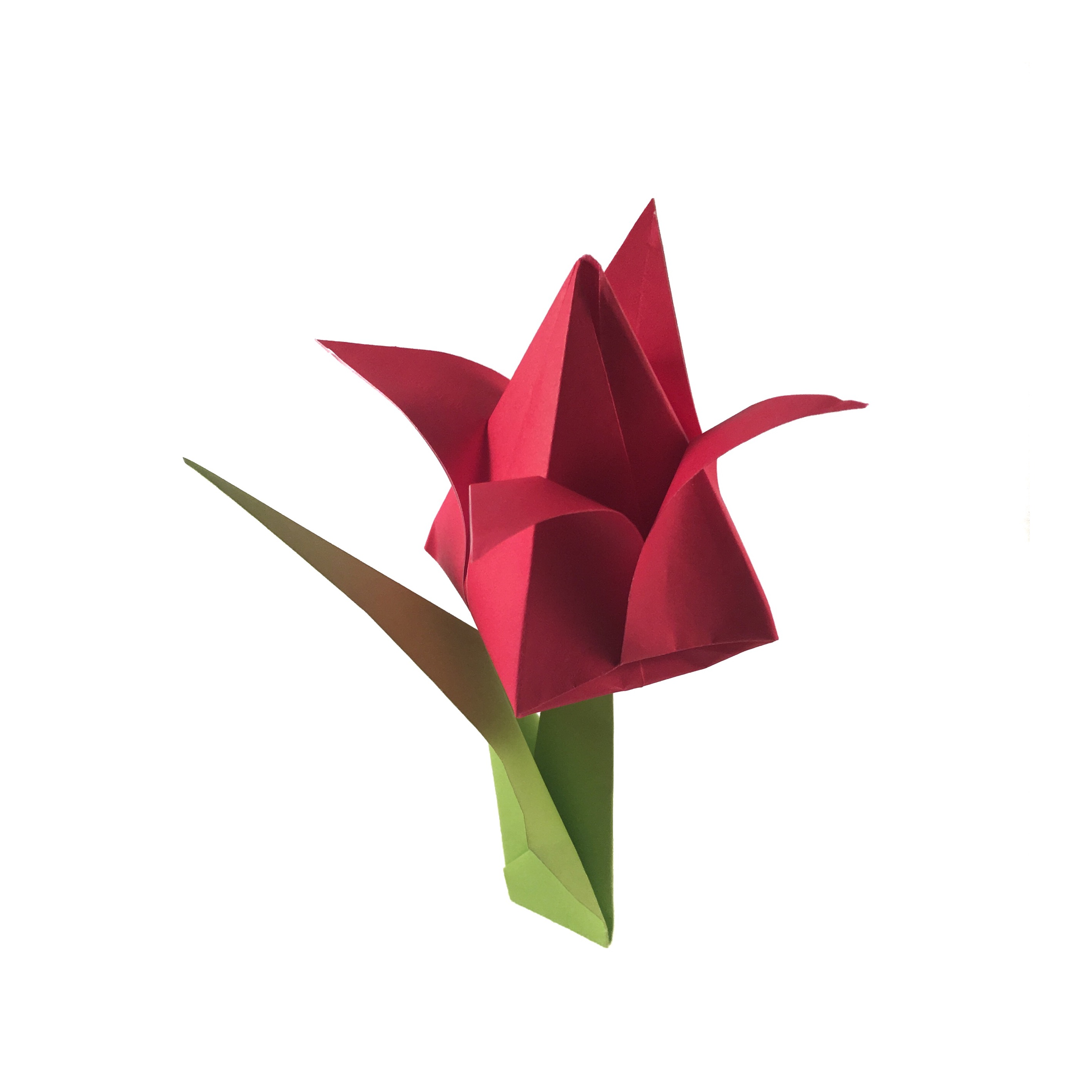 Traditional Origami Tulip